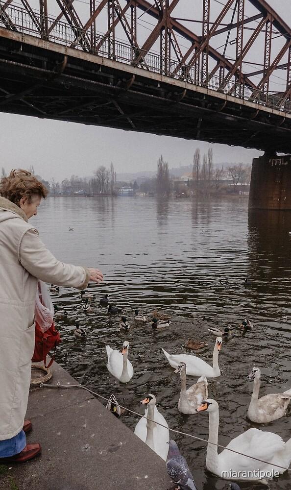 Old lady feeding birds by miarantipole
