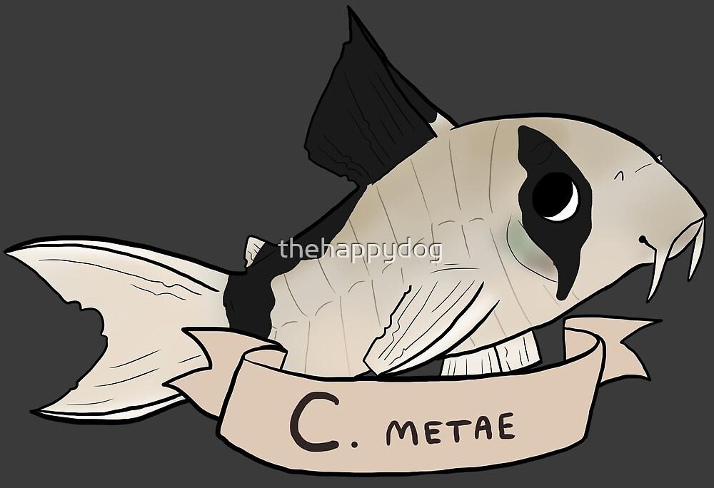 Corydoras metae by Pinto Sketches