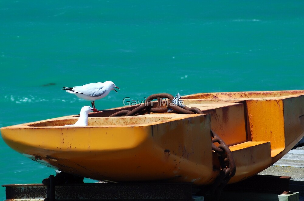 Seagulls at the Jetty by Gavin  Male
