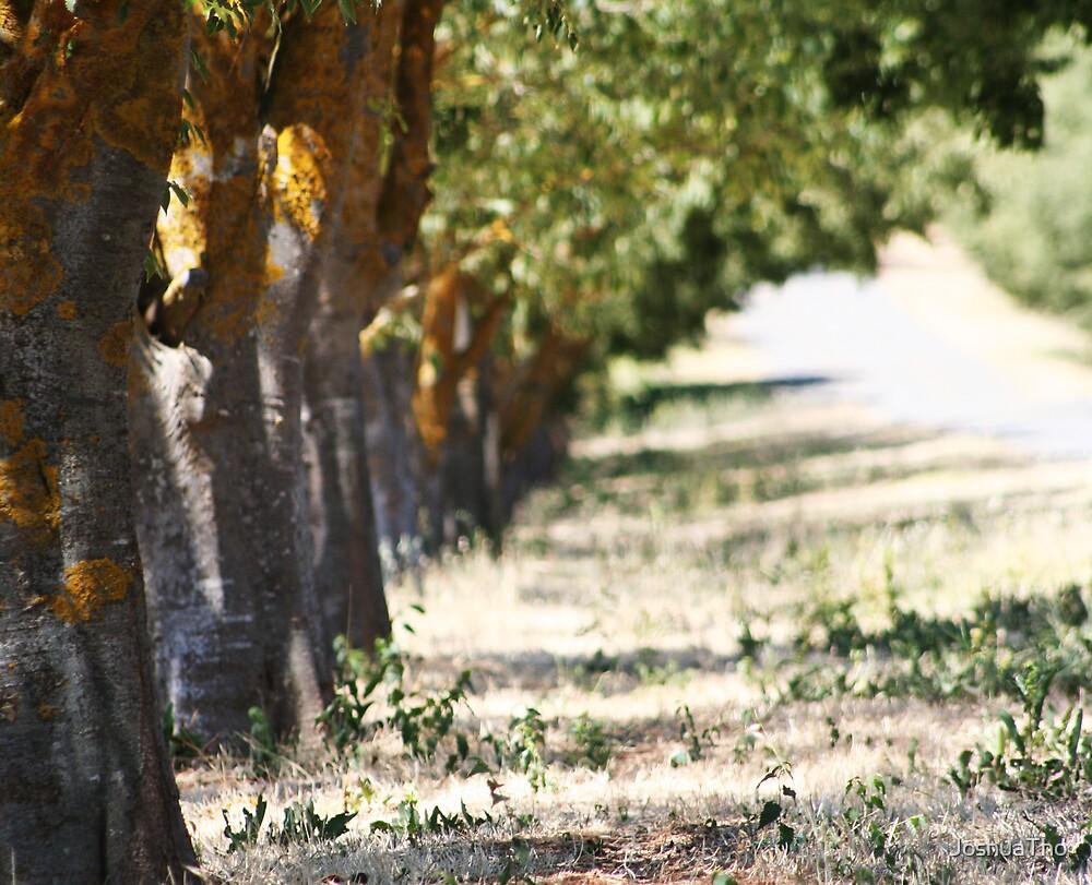 Tanunda Trees by JoshuaTho