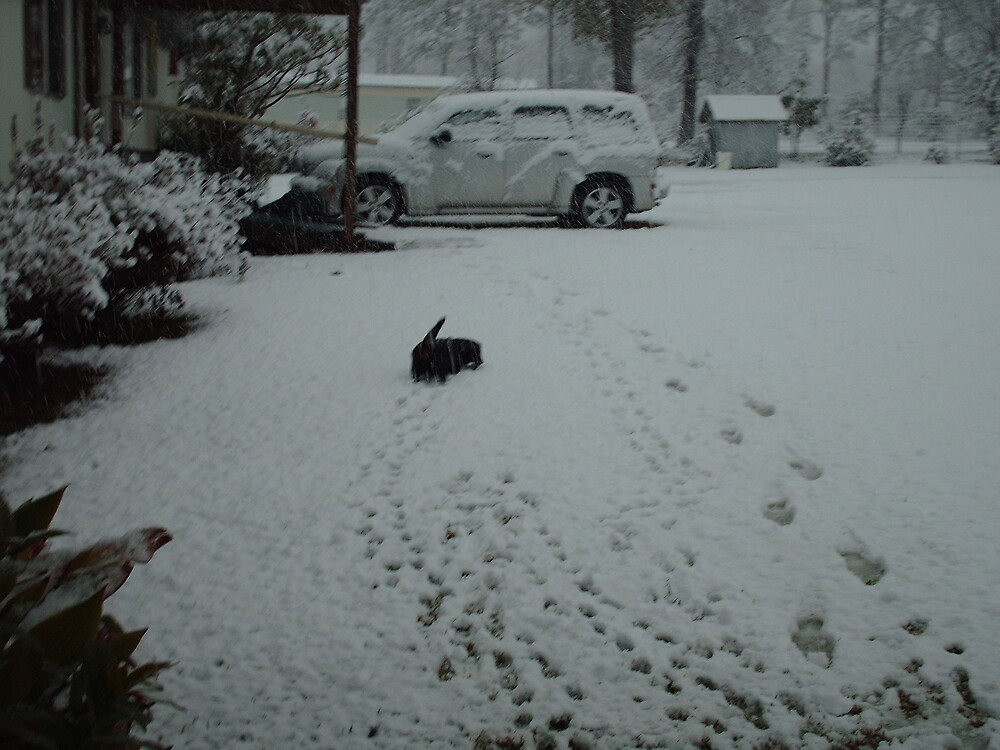 a cold dachshund by talindsey