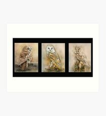 British Owls Art Print