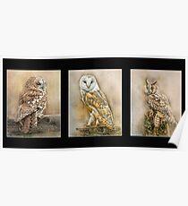British Owls Poster