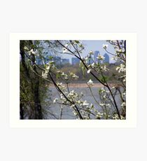 dallas skyline with cherry blossoms Art Print