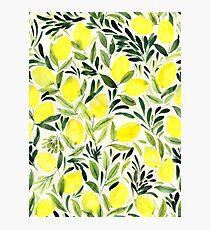 Lemons watercolor on creme white Photographic Print