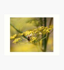 Beeing fennel... Art Print