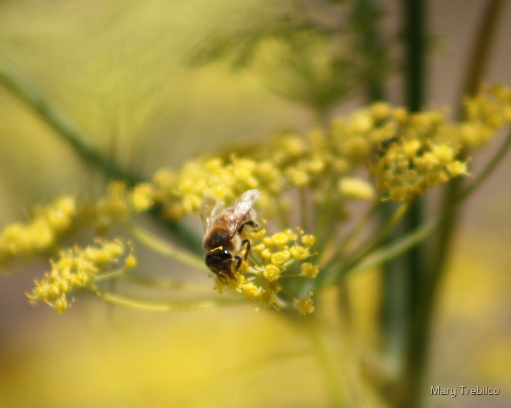 Beeing fennel... by Mary Trebilco