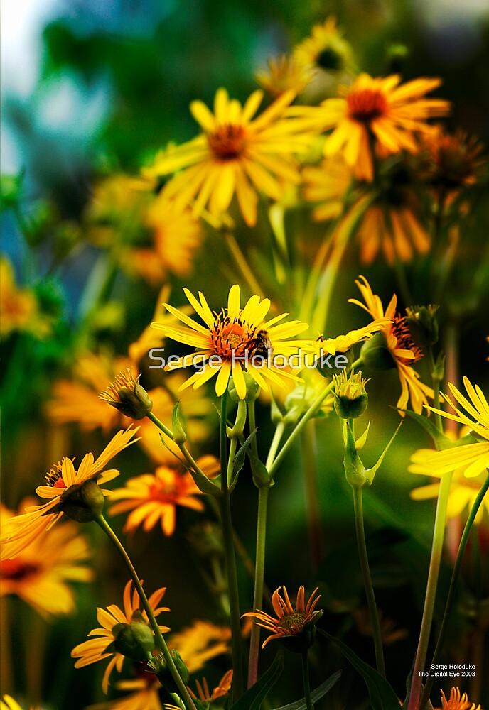 Wild Flowers I by Serge Holoduke