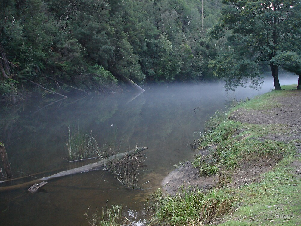 In the mist of Fern Glade Burnie by Goggo