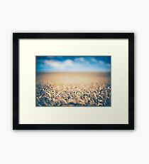 Ripe Wheat Crops Framed Print