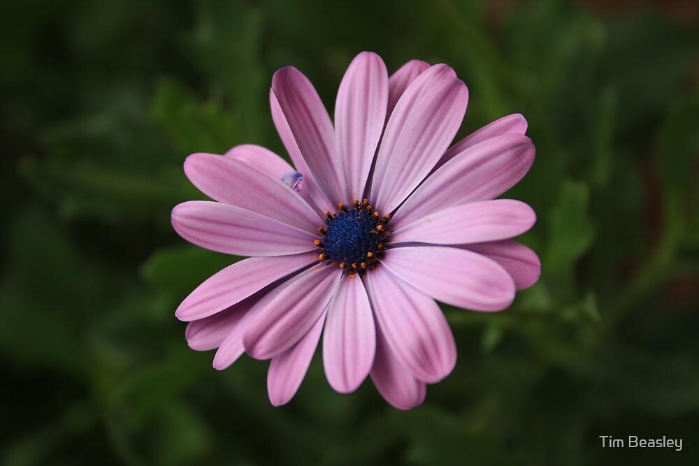 Lone flower by Tim Beasley