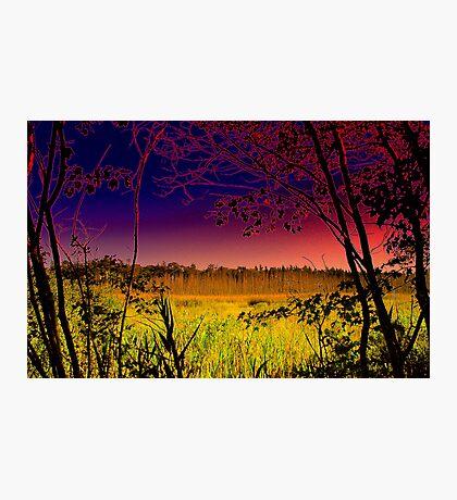 The View  / Cattus Island  Photographic Print