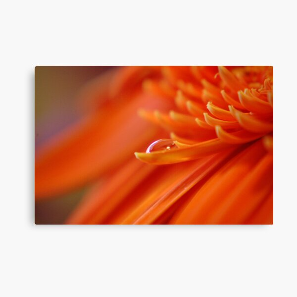 Orange Juice Canvas Print