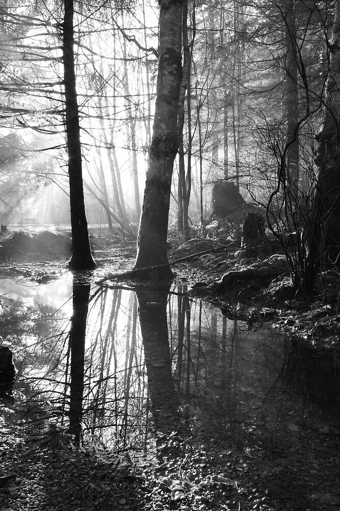 Through the Trees by Stephanie Ogg
