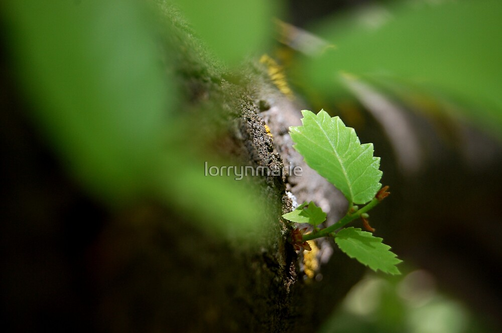 New growth by lorrynmarie