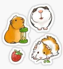 Guinea Pig set 1 Sticker