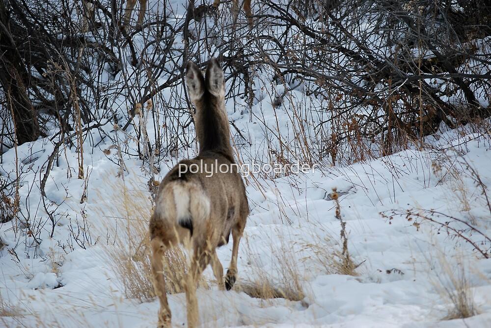 Escaping Deer by polylongboarder