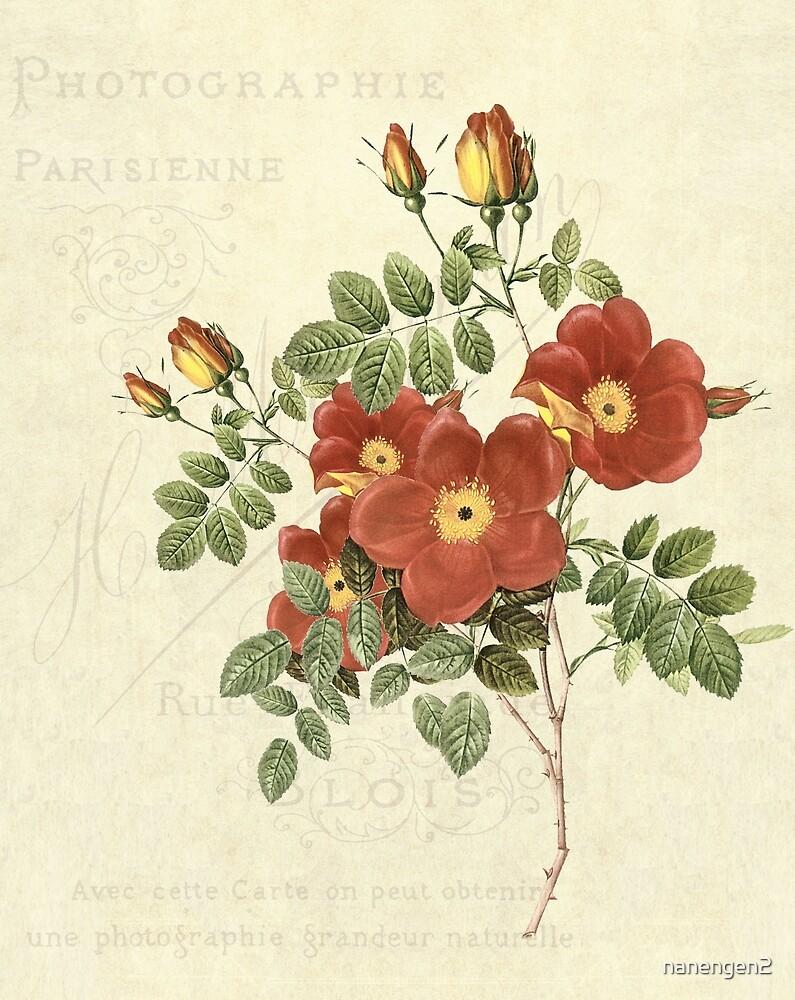 Vintage Red Briar Roses by nanengen2