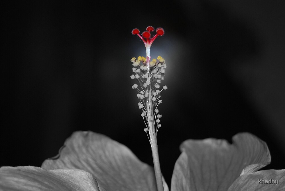 Coming back to life.. by khadhy