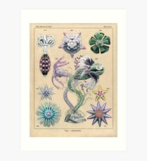 Echinoderms Plate Art Print