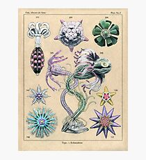 Echinoderms Plate Photographic Print