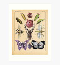 Bug Plate Art Print