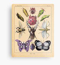 Bug Plate Metal Print