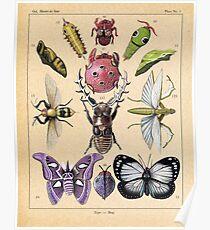 Bug Plate Poster