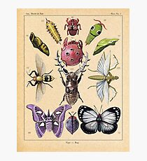 Bug Plate Photographic Print