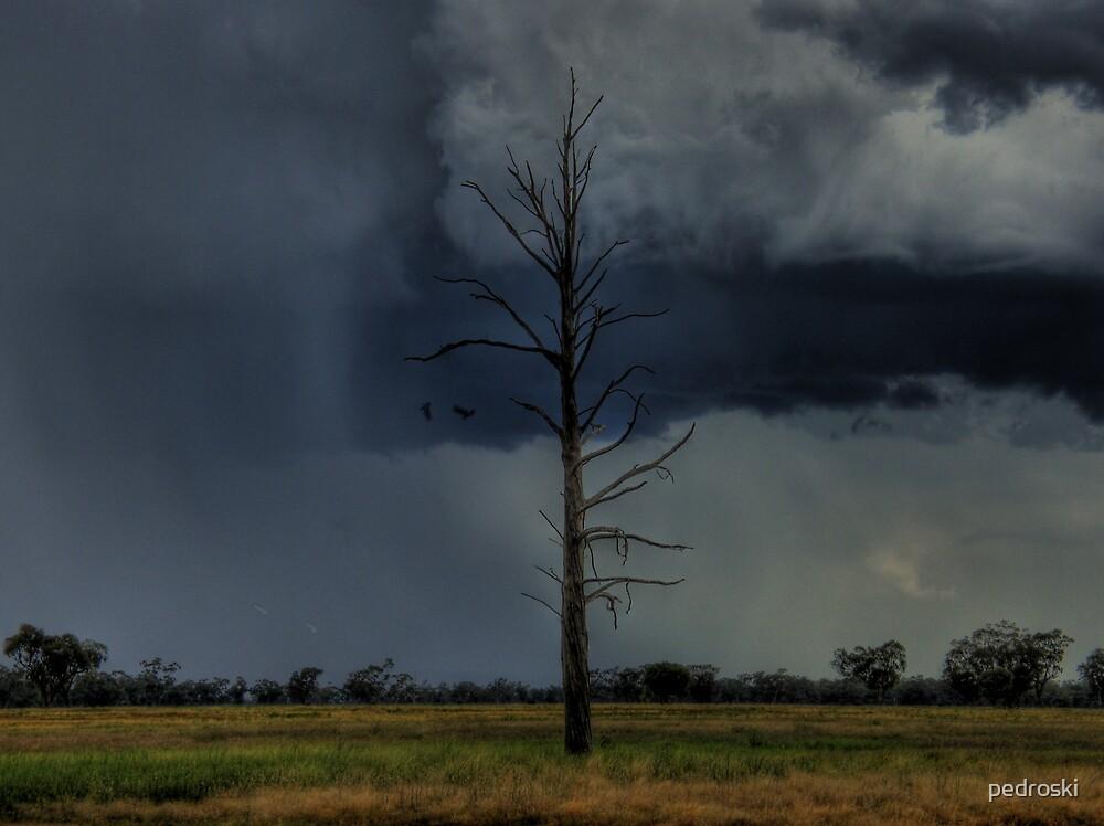 Wilber Storm 003 by pedroski