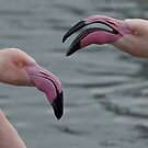 Never argue with a flamingo ;-) by Thea 65