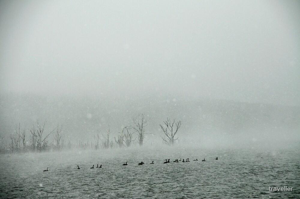 """Arthur""""s Lake by traveller"""