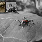 Bug by Joeltee