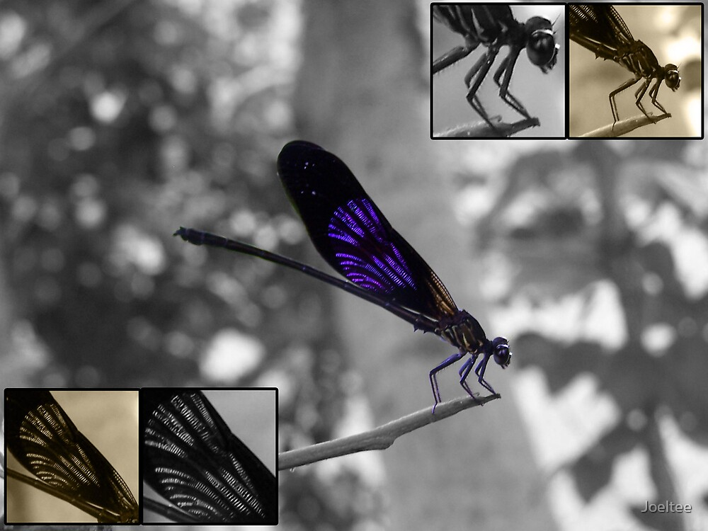 Dragonfly by Joeltee