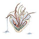 Heart Aquarium by Hannah Rothstein