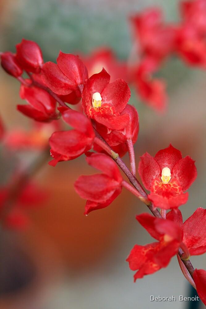 Red Orchids by Deborah  Benoit