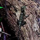 Green Dragon by Rodney Wratten