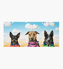 Working Dogs Photographic Print