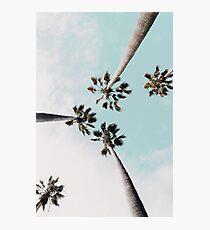 Lámina fotográfica Palmeras Palmeras imprimir