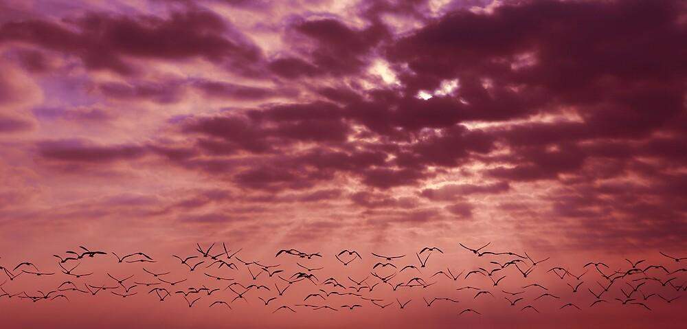 Skimmers at Sunrise by sailorsedge
