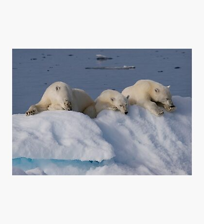 Resting Bears Photographic Print