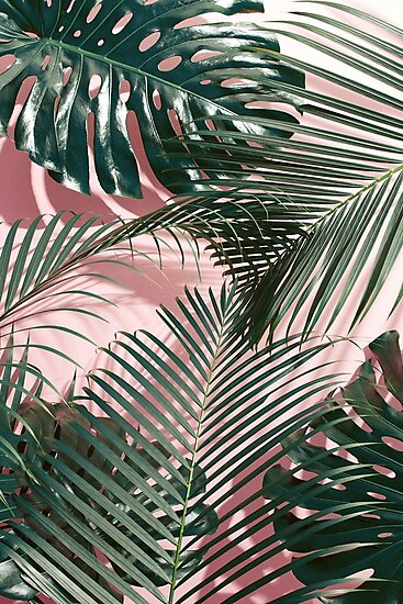 green tropical leaves on a pink wall palm leaves photographic