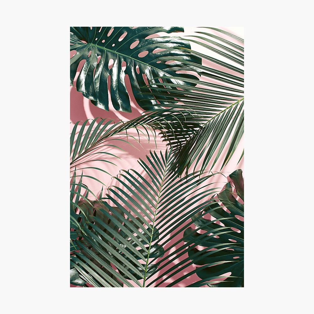 Green tropical leaves on a pink wall | Palm leaves  Photographic Print