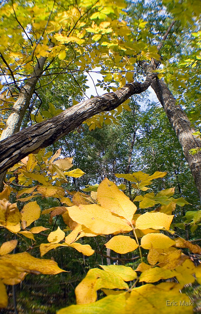 fall colors yellow and green by Eric Maki