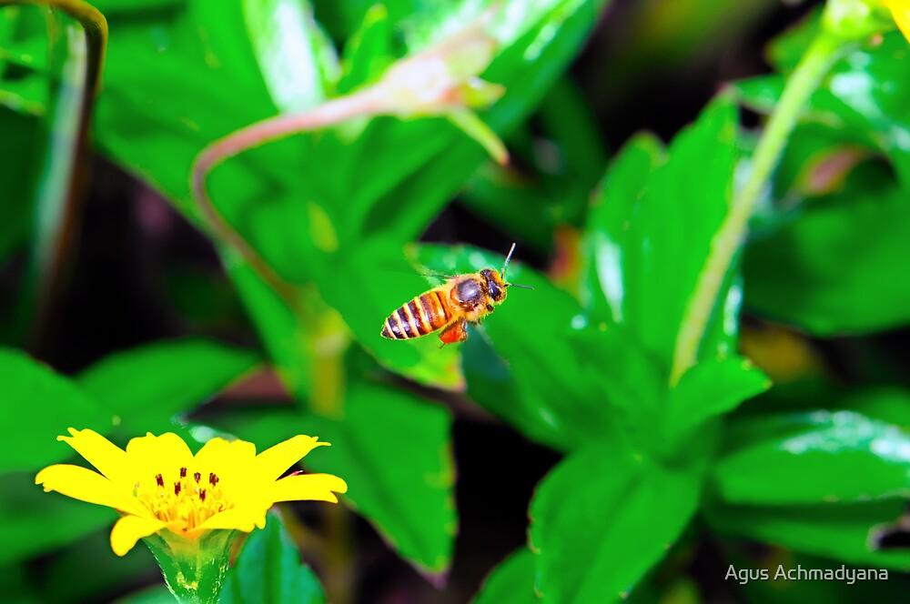 FLY AWAY by Agus Achmadyana