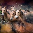 Brumbies Seven by Clare Colins