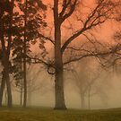 Through the mist and fog by Cricket Jones