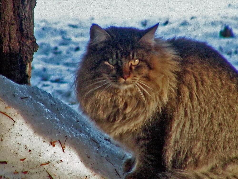 Bobby Cat by Edward Henzi