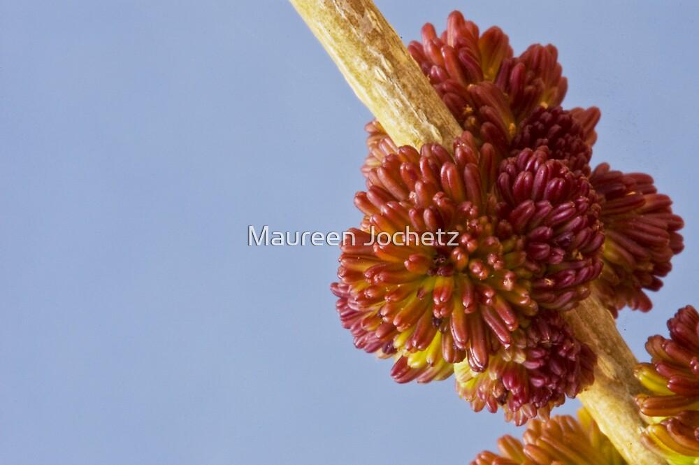 Arizona Ash Flowers by Maureen Jochetz