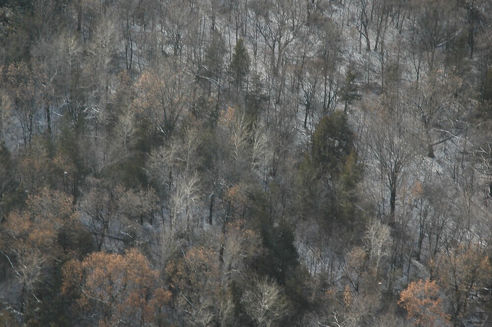 aerial winter trees by cynthia  brown